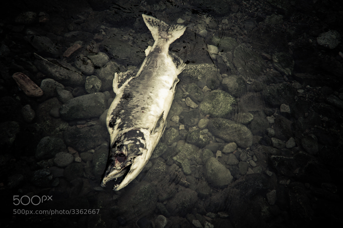 Photograph Salmon Cycle by JB Woodruff on 500px