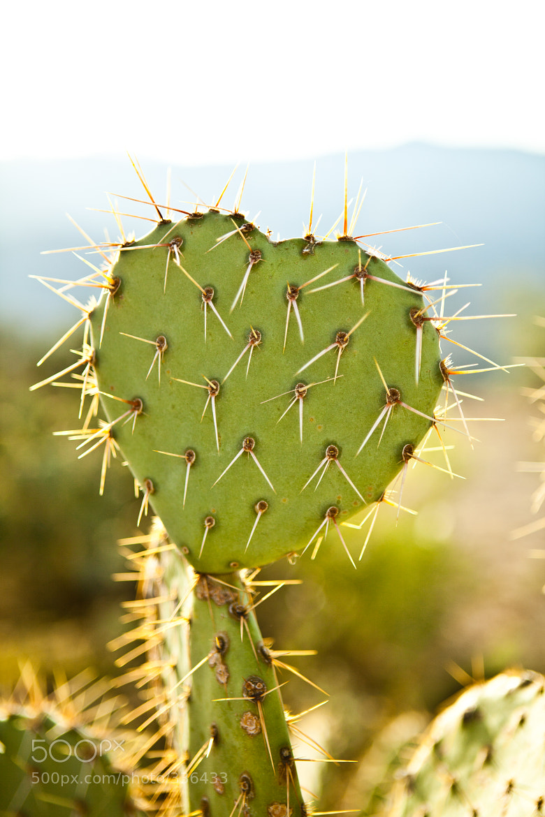 Photograph prickly love by Be My Light Photography on 500px