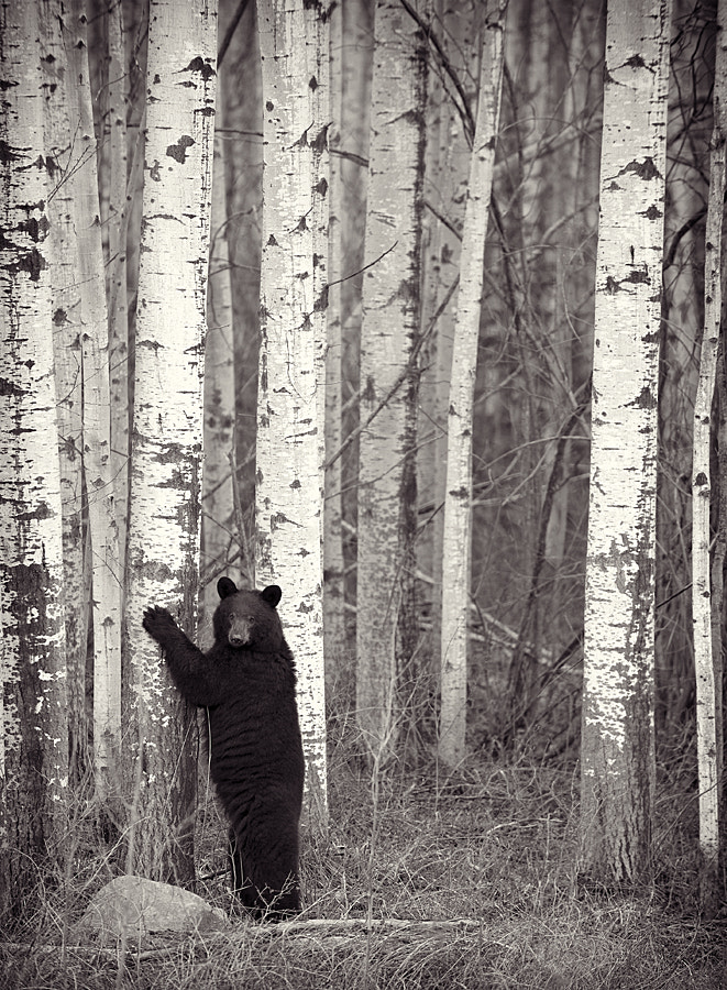 Photograph Tree Hugger by Dan Newcomb on 500px