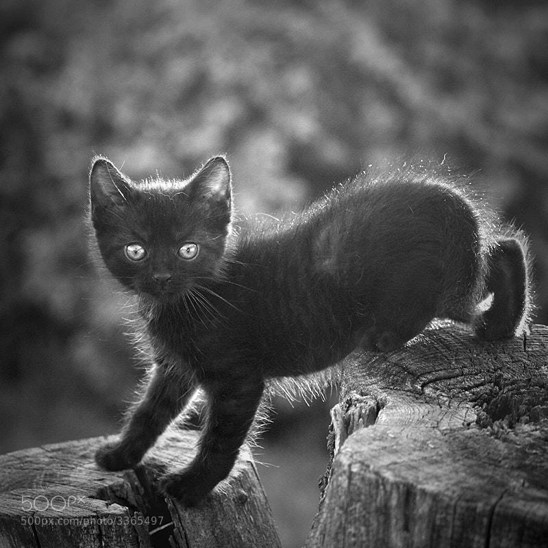 Photograph =ö= by Szilvia Pap-Kutasi