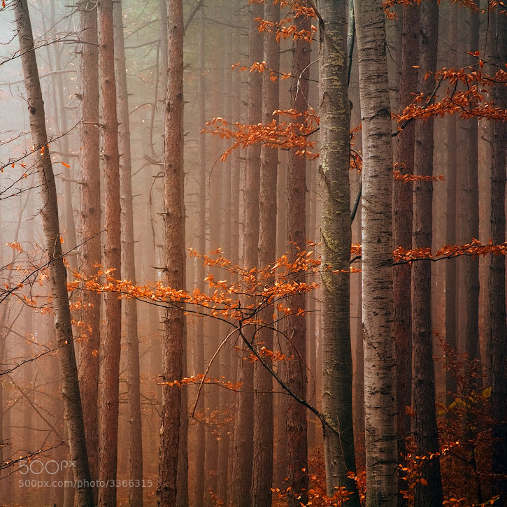 Photograph Red Wood by Evgeni Dinev on 500px
