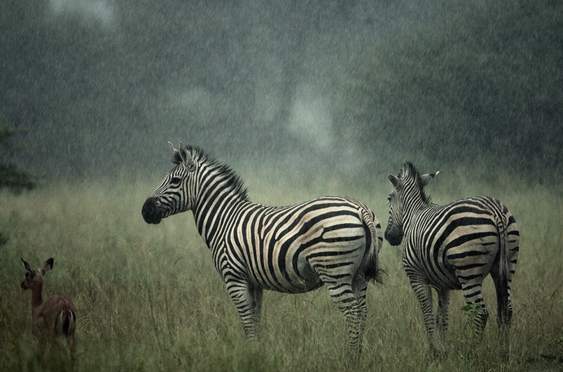 Photograph waiting for sunshine by  Irca Caplikas on 500px