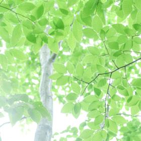 Green Shower by Ichiro Goshima (IchiroGoshima)) on 500px.com