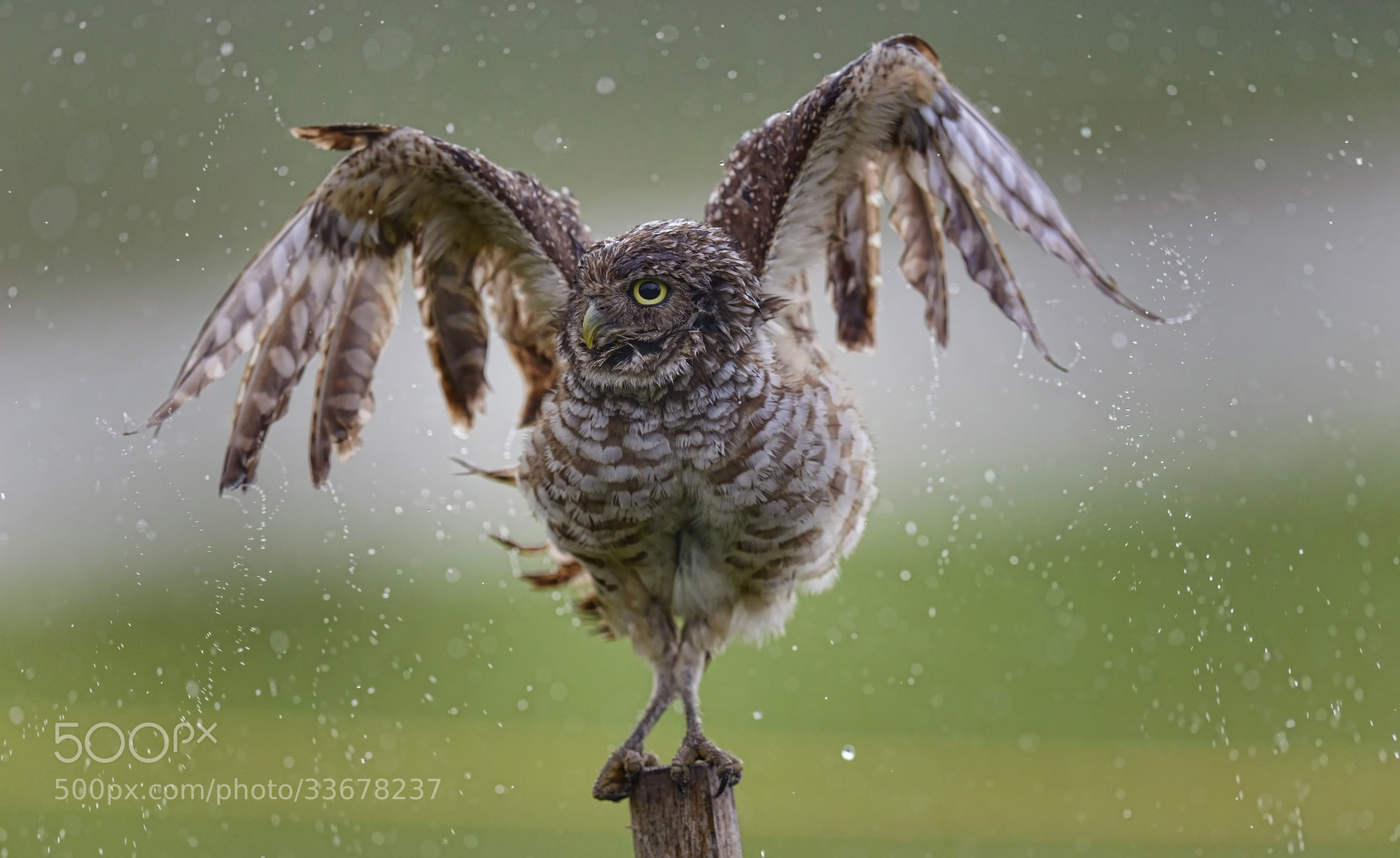 Photograph Rain Shower by Rhona Wise on 500px