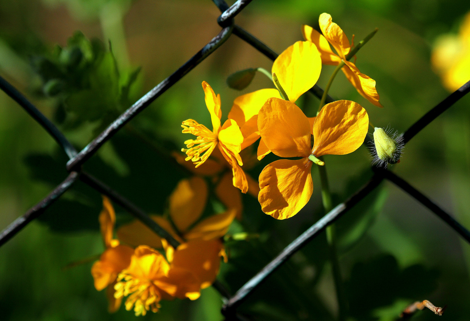 Photograph Flowers on a fence by Rainer Leiss on 500px