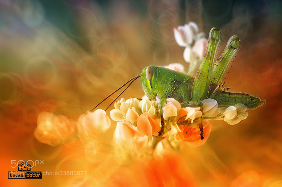 Photograph Waiting by Chandra Art on 500px