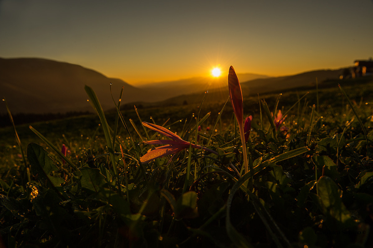 Photograph all'alba.... by Gianluca Schivo on 500px