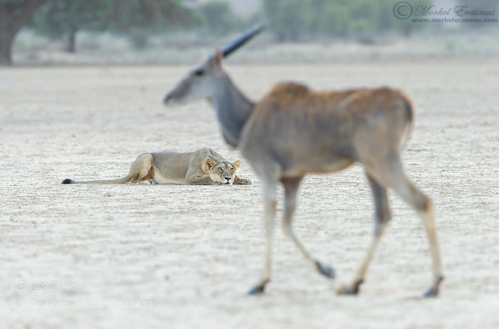 Photograph Predator and Prey by Morkel Erasmus on 500px