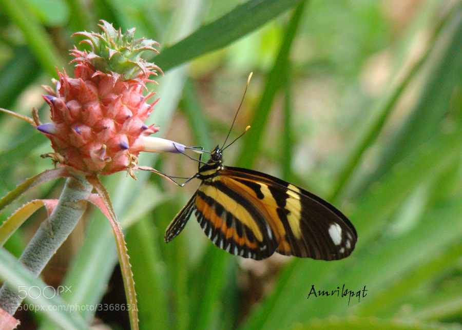 Photograph Having nectar by Lety Monteiro on 500px