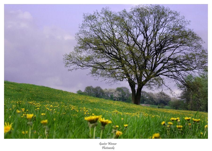Photograph dandelion and tree by Gunter Werner on 500px