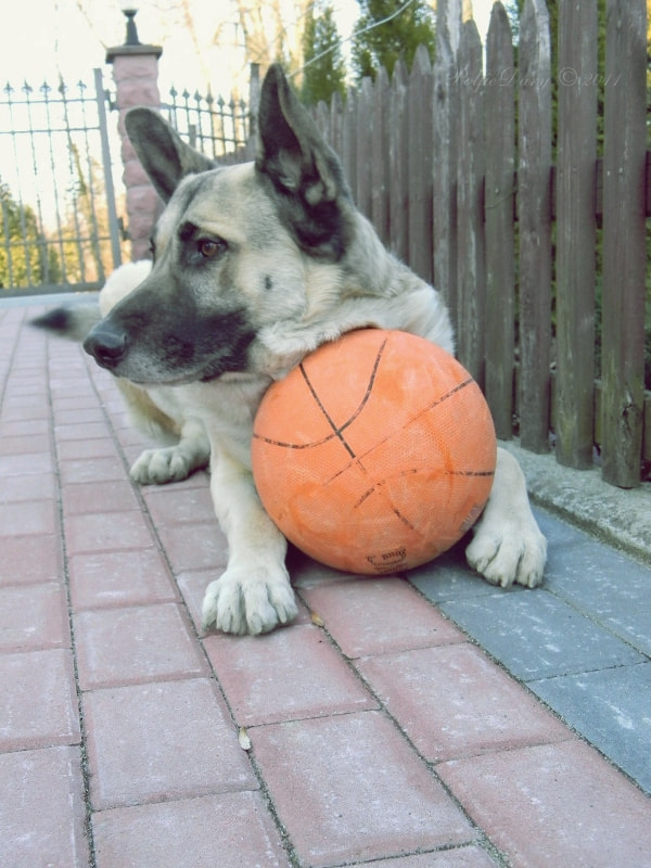 Photograph Niko and his ball by Anne B on 500px