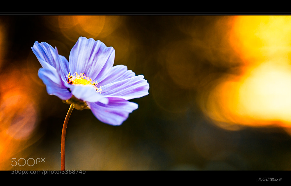 Photograph Dreaming of light by Zdravko  Horvat on 500px