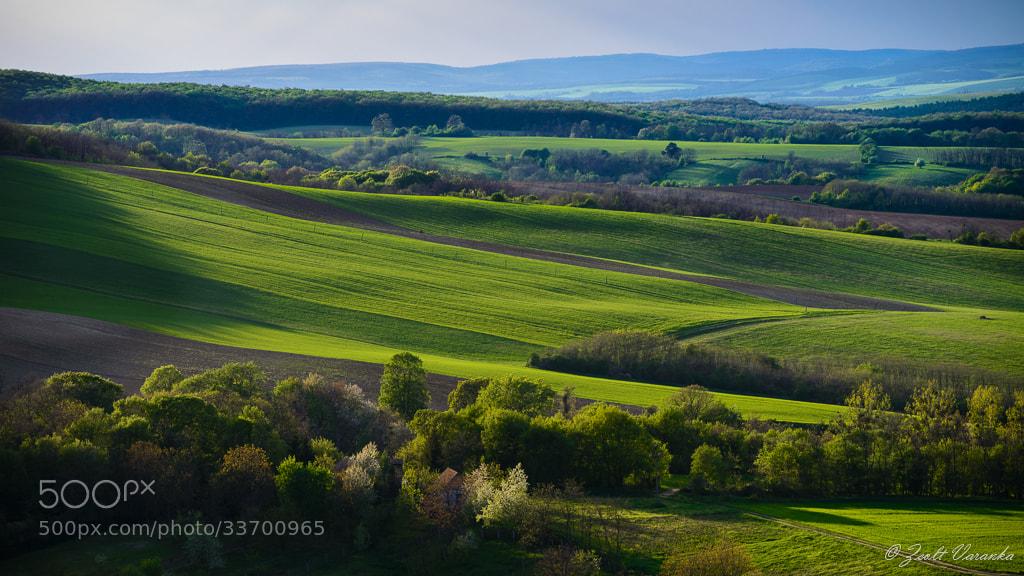 Photograph the beauty of April green by Zsolt Varanka on 500px