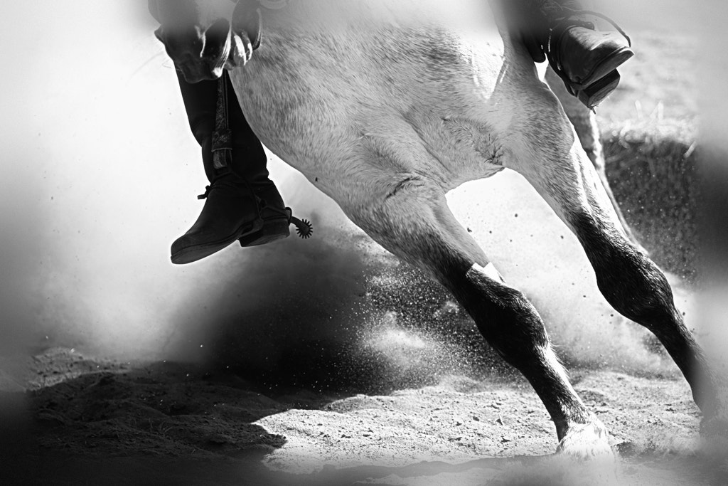 Photograph Crioulo Horse by Alberto Nogueira Junior on 500px