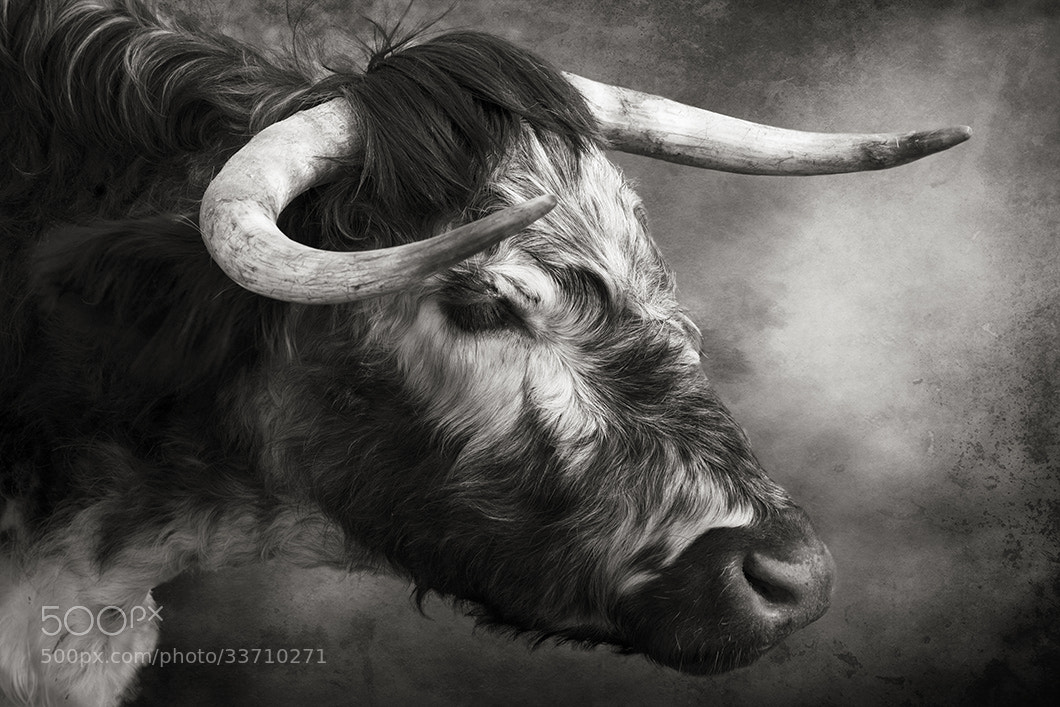 Photograph Horns by Audran Gosling on 500px