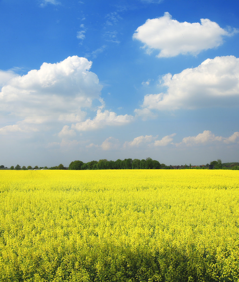 Photograph Yellow fields,blue sky by Maruscik Photography on 500px