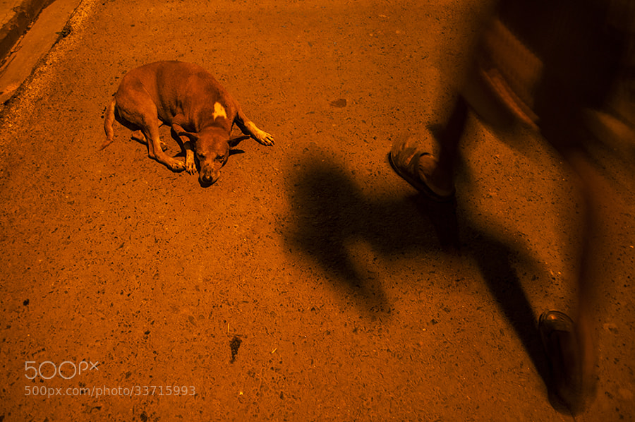 Photograph Shadow and Rest by _Ronnie on 500px