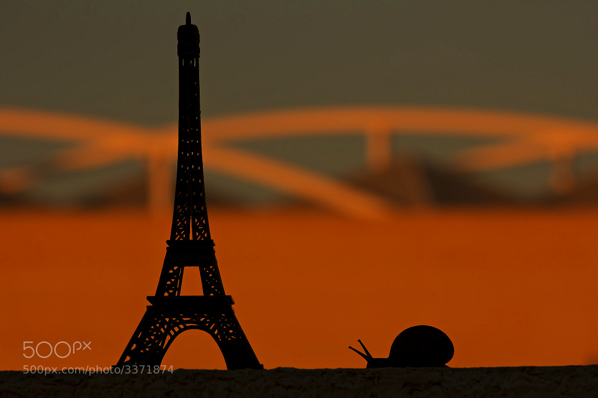 Photograph Un snail in Paris by Tony Goran on 500px