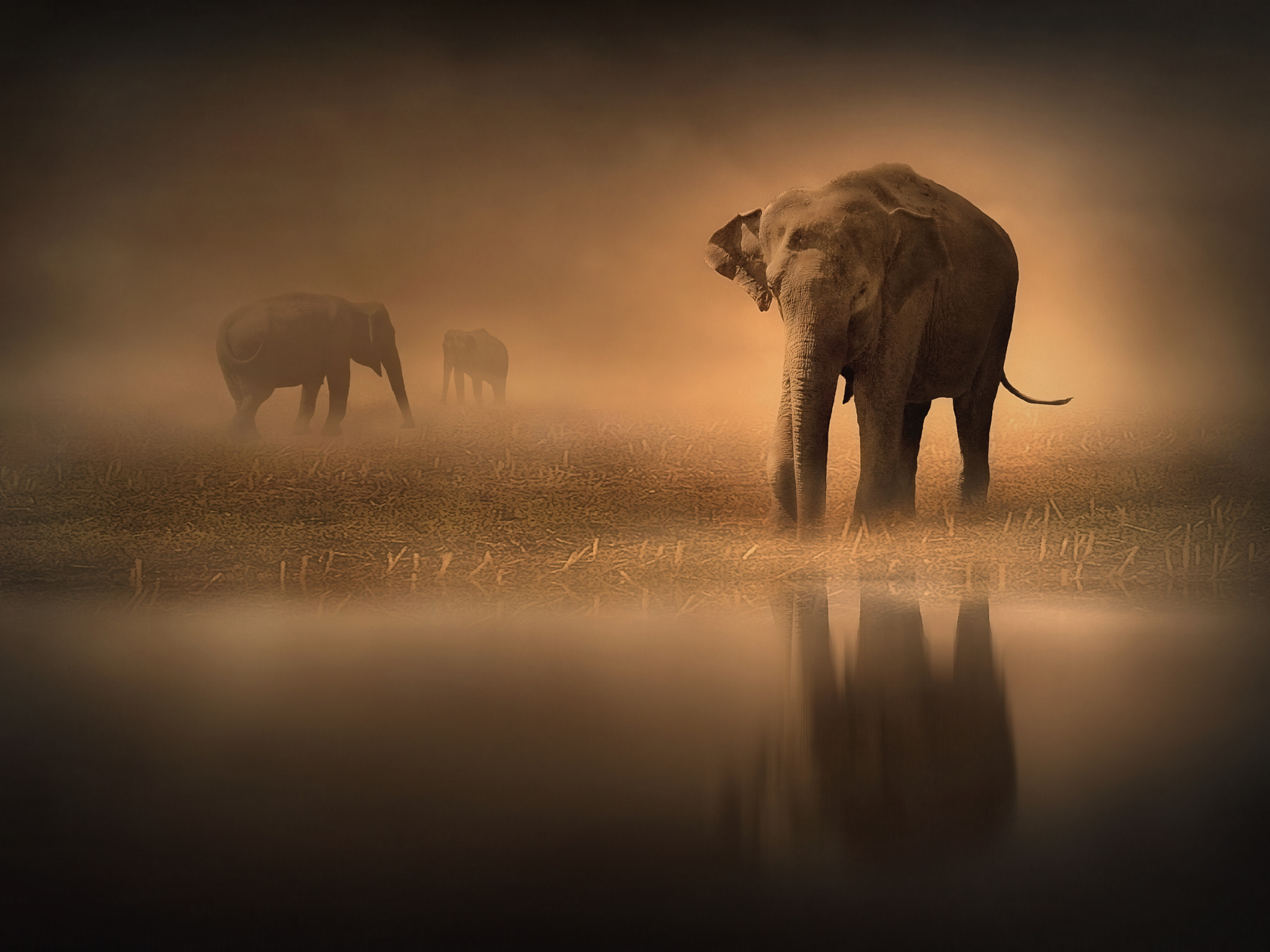 Photograph Elephants in the Mist by Jenny Woodward on 500px