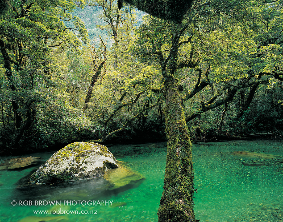 Photograph Clinton River, Milford Track by Rob Brown on 500px