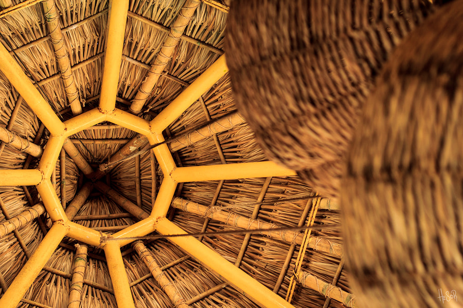 Photograph Bamboo Sun by Hugo Russell on 500px