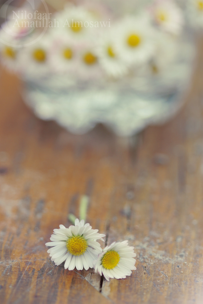 Photograph Warmth by Amatillah Almosawi on 500px