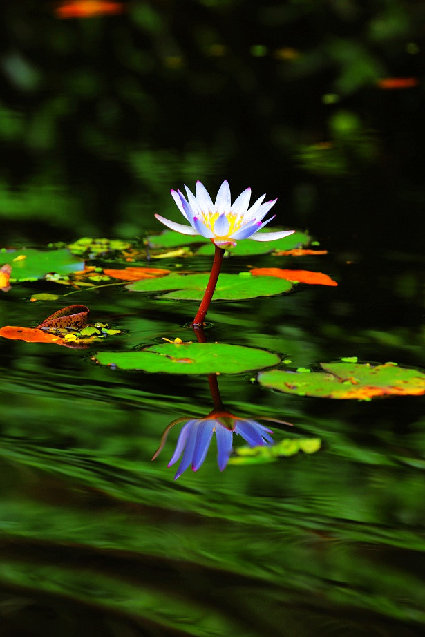 Photograph Flower28 by Zhu xiao ping on 500px