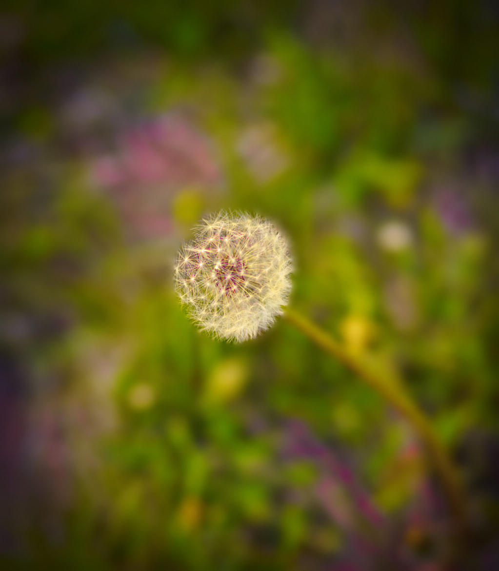 Photograph Depth Of field by Jayanth Kommidi on 500px