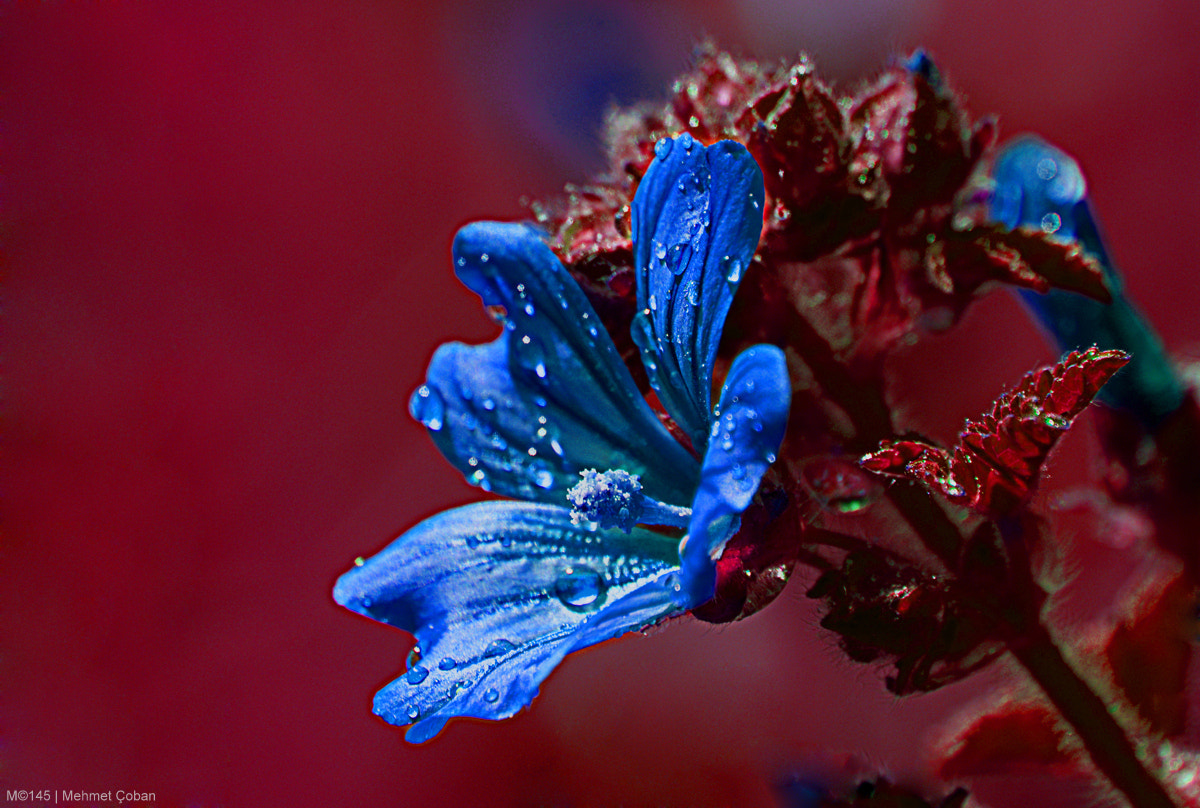 Photograph Claret and blue by Mehmet Çoban on 500px