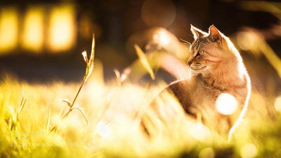 Photograph Twilight of Melancholy by Seiji Mamiya on 500px
