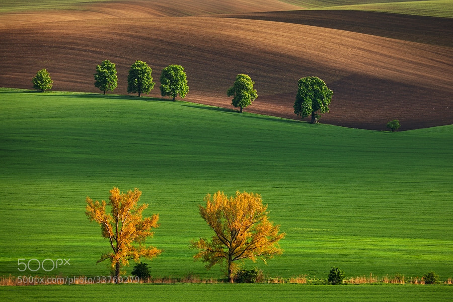Photograph South Moravia III by Daniel Řeřicha on 500px