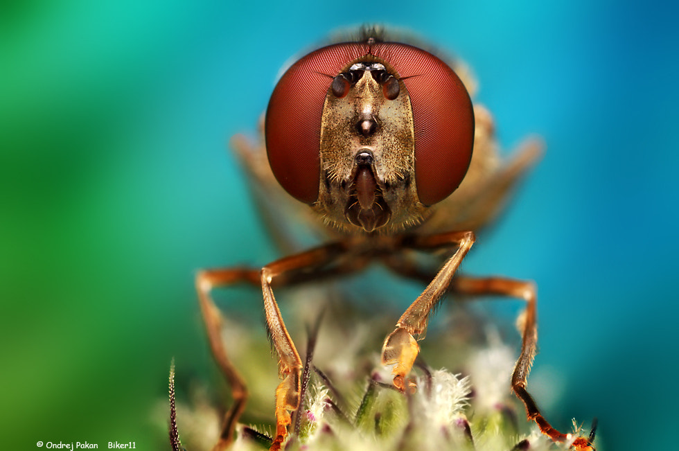 Photograph Red eyes by Ondrej Pakan on 500px