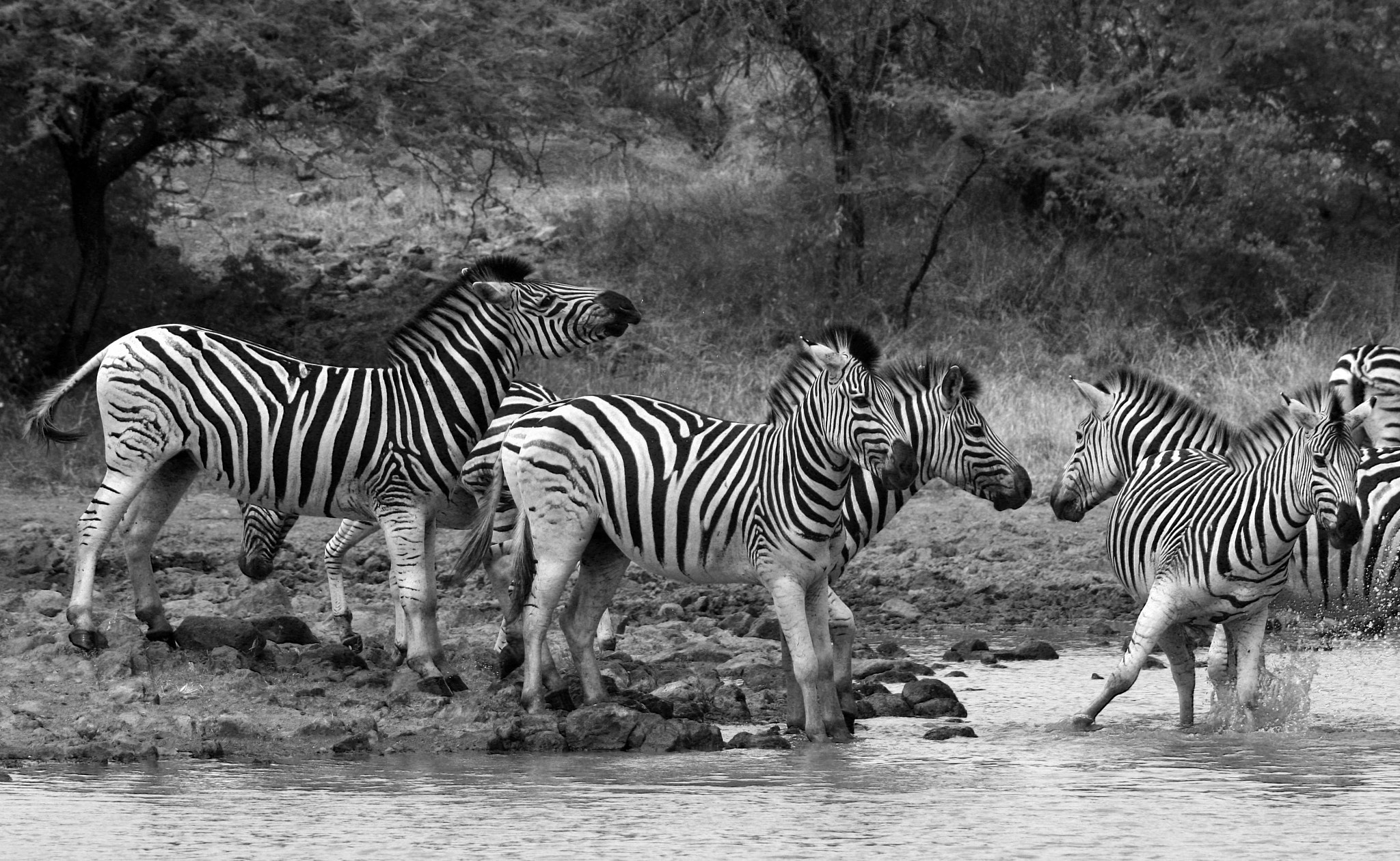 Photograph The Waterhole 2 by Nicholas Dirnberger on 500px