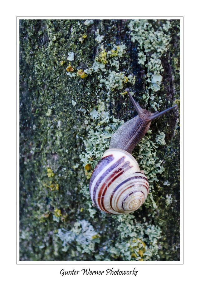 Photograph snail II by Gunter Werner on 500px