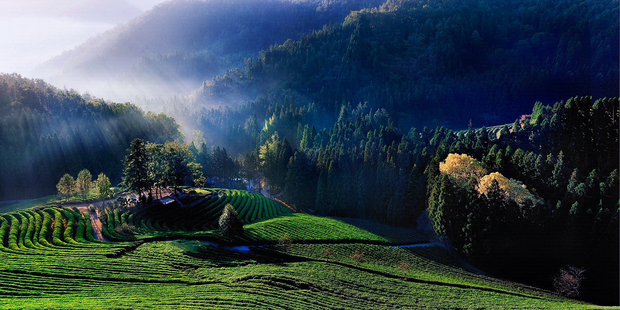 Photograph The morning of the tea plantation. by Yong Hak Yoon on 500px