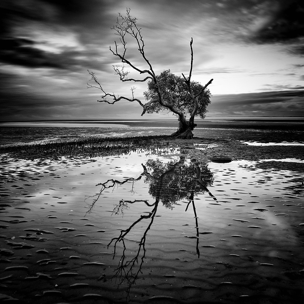 Photograph Low Tide by Kim Stevens on 500px