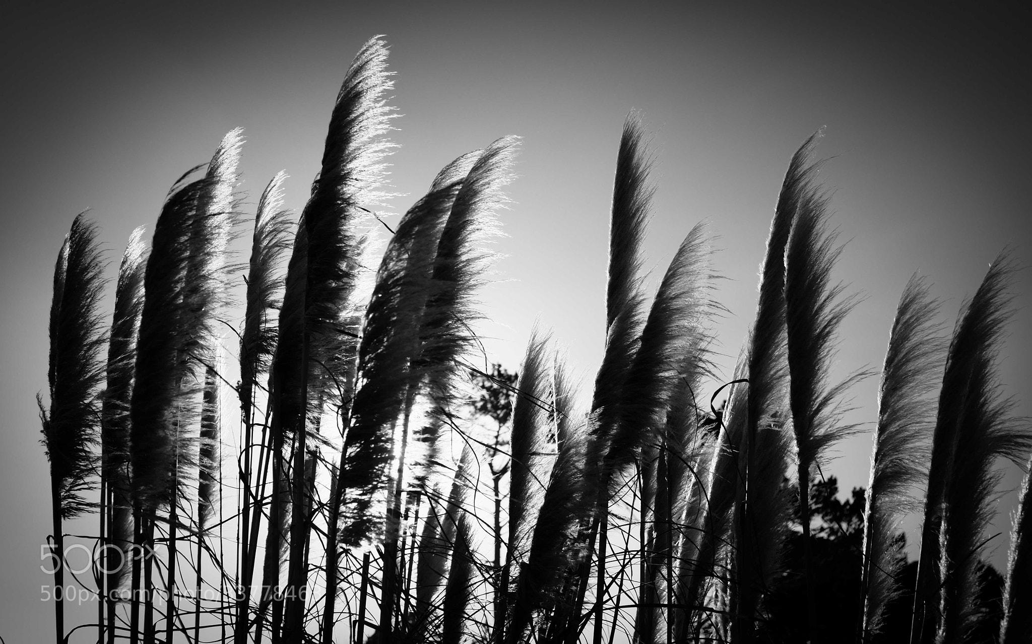 Photograph CutyCuty by Etienne de Beer on 500px