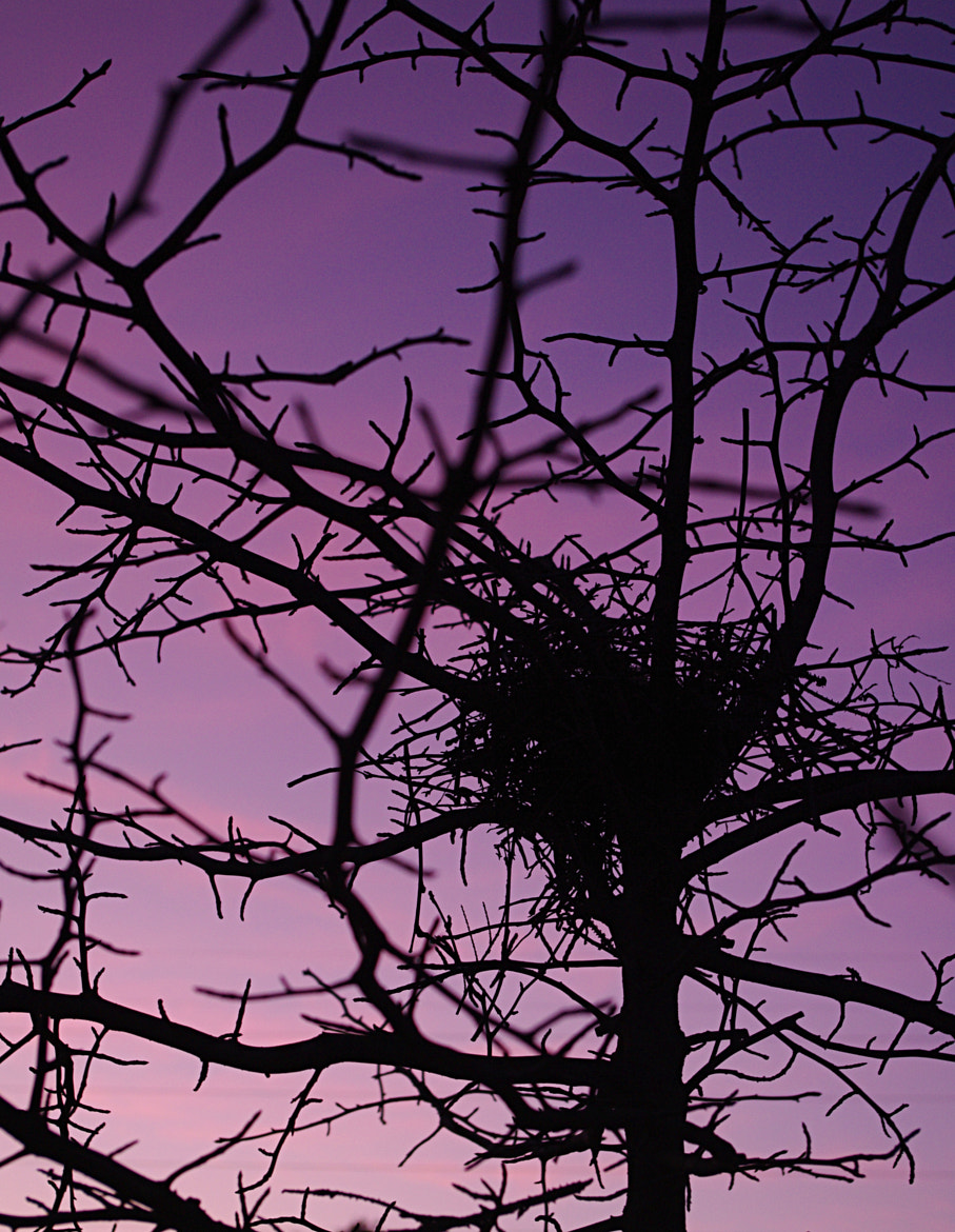 Photograph Empty Nest Syndrome by Jay B. Wilson on 500px