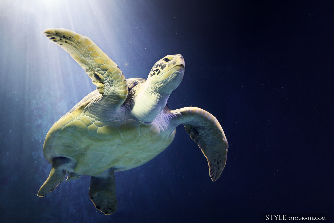 Photograph Turtle by Patrick Rosyk on 500px