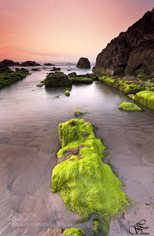 Photograph los verdes al sol by Lujó Semeyes on 500px