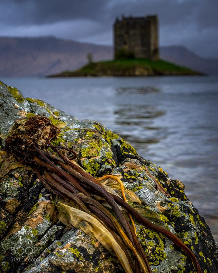 Photograph Castle Stalker colours... by David Mould on 500px