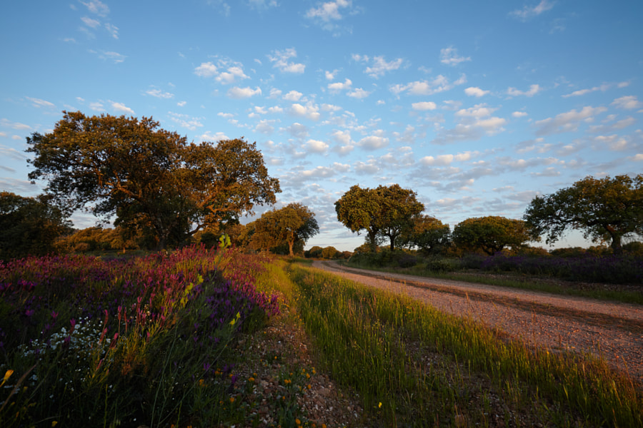 Early morning in a dehessa in Extremadura