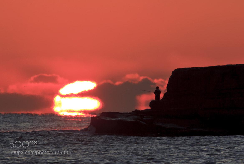 Photograph Sun fish by minseung ahn on 500px