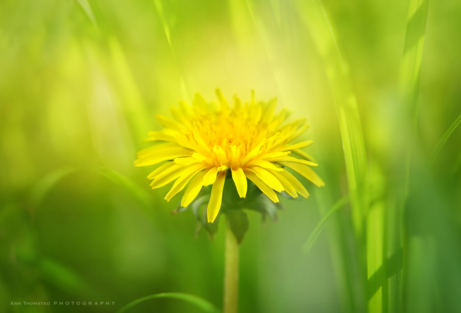 Photograph Pretty Little Weed by Ann Thomstad on 500px