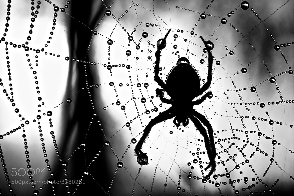 Photograph The web by Rasmus Mattsson on 500px