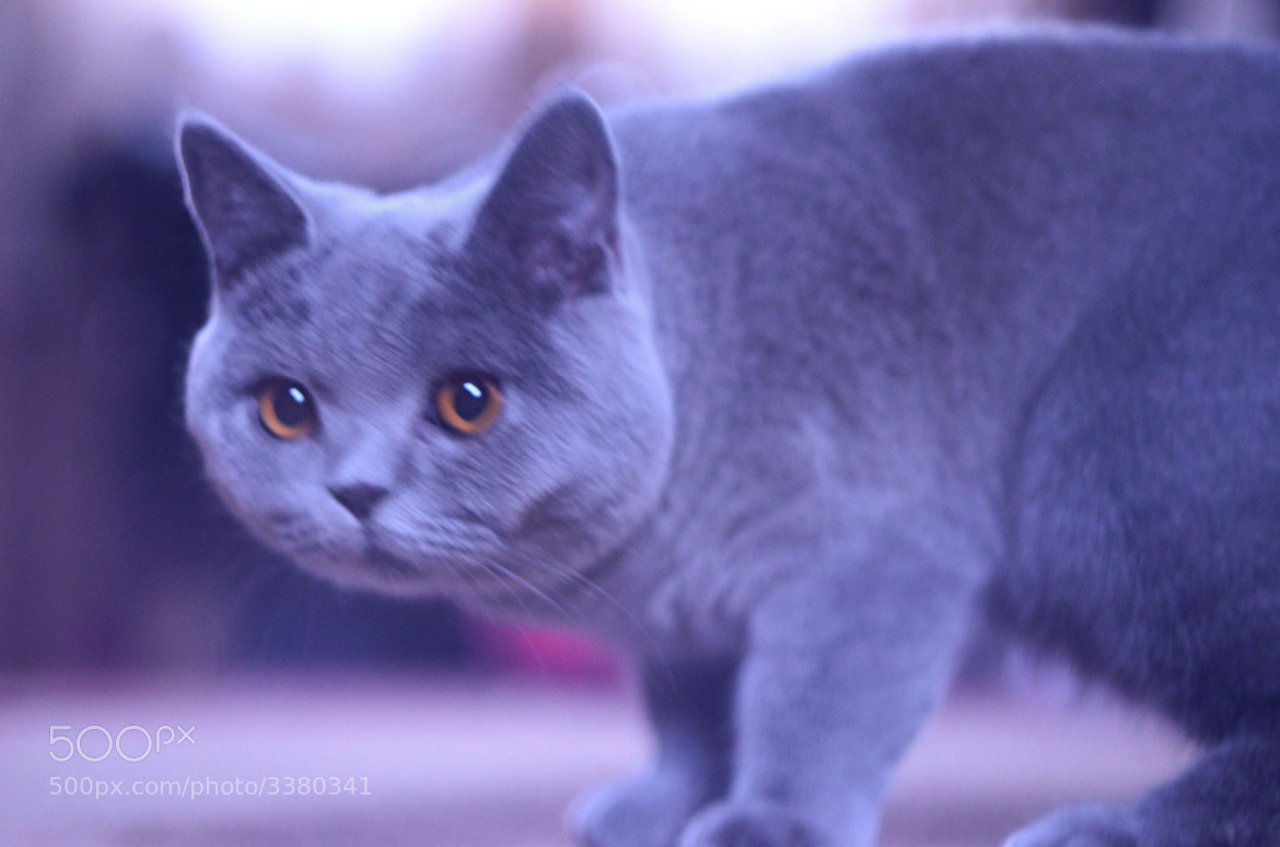 Photograph Cat by Mike Prokofyev on 500px