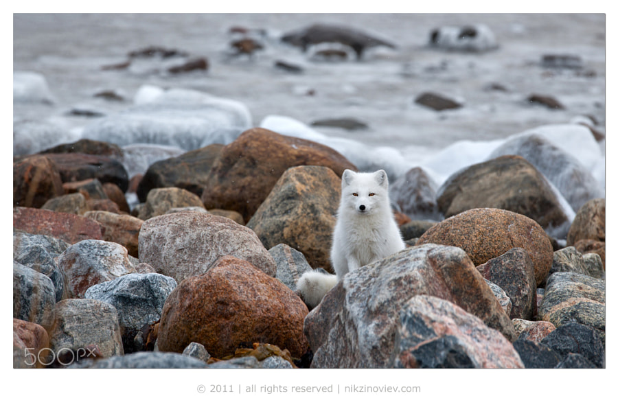 Photograph Northern encounter by Nikolai Zinoviev on 500px
