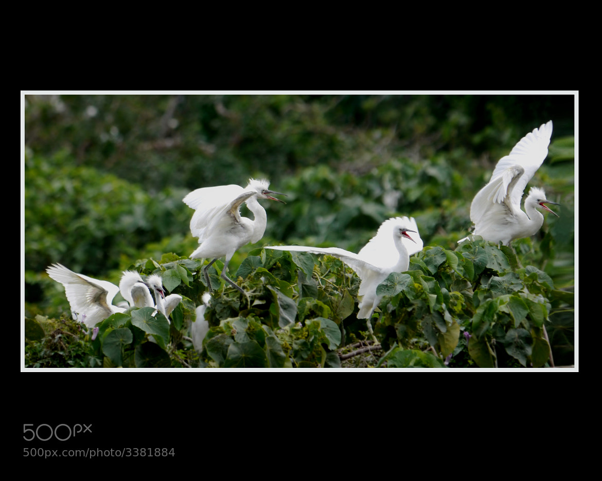 Photograph Sing Sing Sing by Sherman C. on 500px