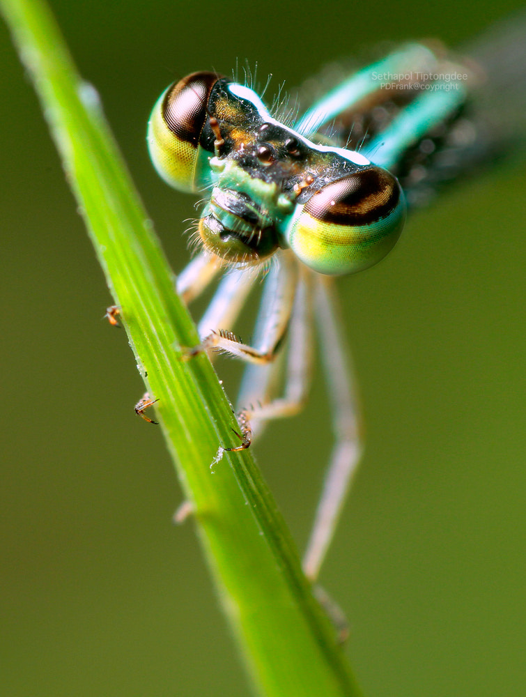 Photograph Green Eye by sethapol tiptongdee on 500px