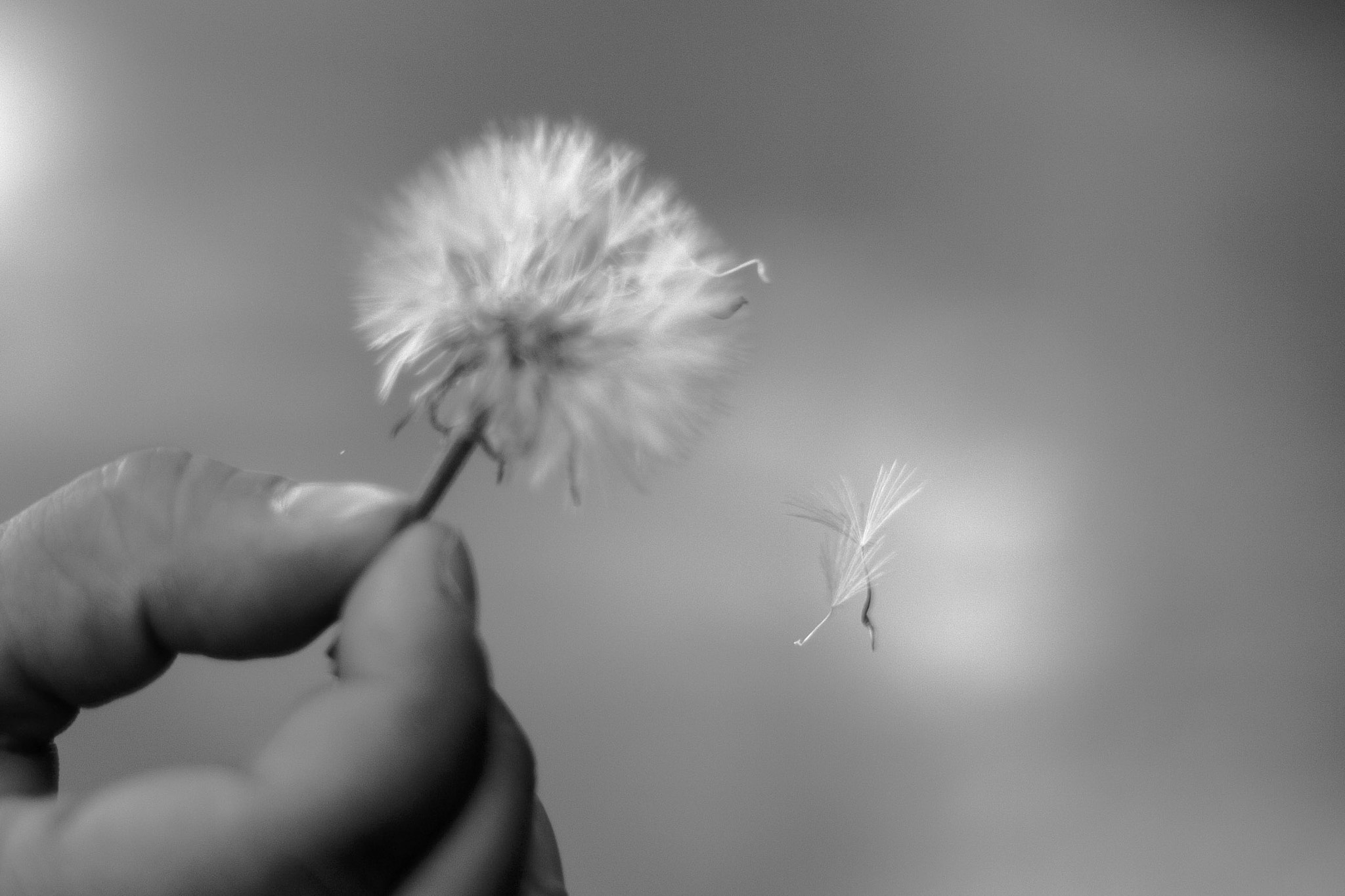 Photograph blow a wish by Rebeca Moncho on 500px